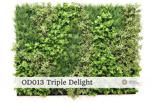 OD013-Triple-Delight1