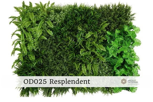 OD025-Resplendent