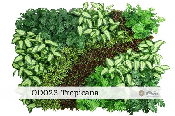 OD023-Tropicana